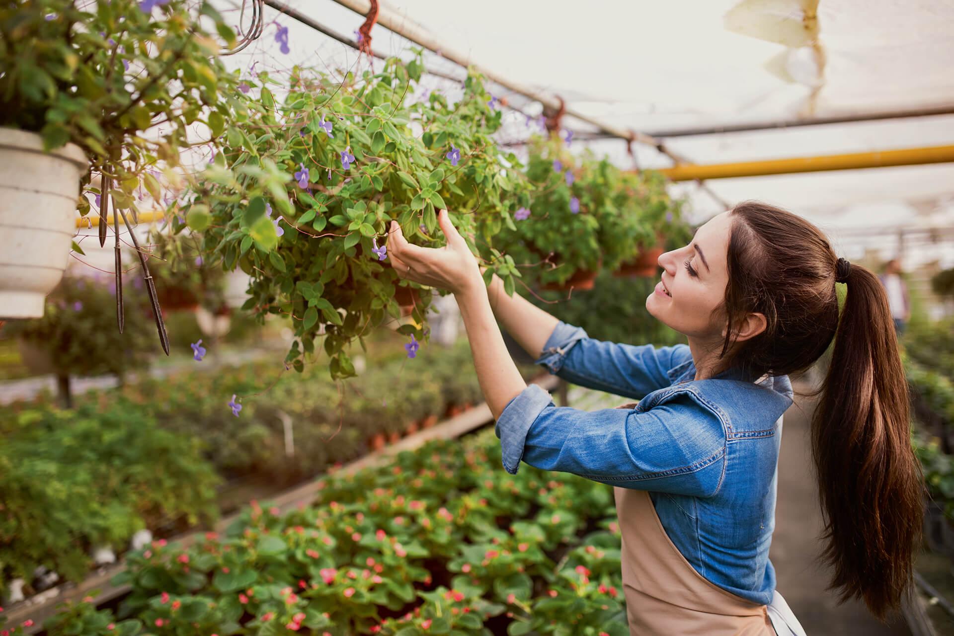 POUR VOUS, LES PRODUCTEURS DE LÉGUMES, FRUITS, PLANTES D'ORNEMENT…